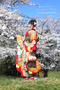 20190413  ロケーション 成人式振り袖 古典柄 桜